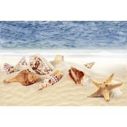 ODH Sea Shells HL
