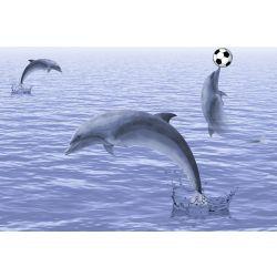 SDH Dolphin Hl