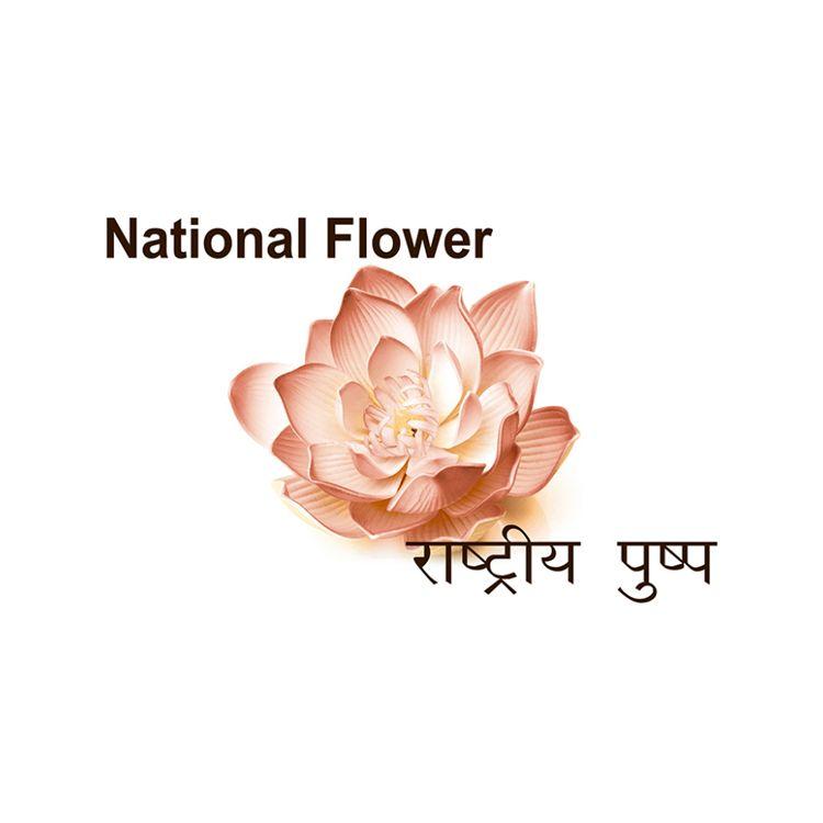 SC National Symbols